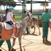 granja_escuela_burros