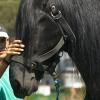 granja_escuela_caballo