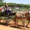 granja_escuela_coche_caballo