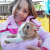 granja_escuela_conejo