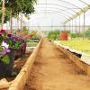 granja_escuela_invernadero