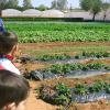 granja_escuela_plantacion