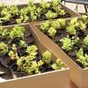 granja_escuela_plantas